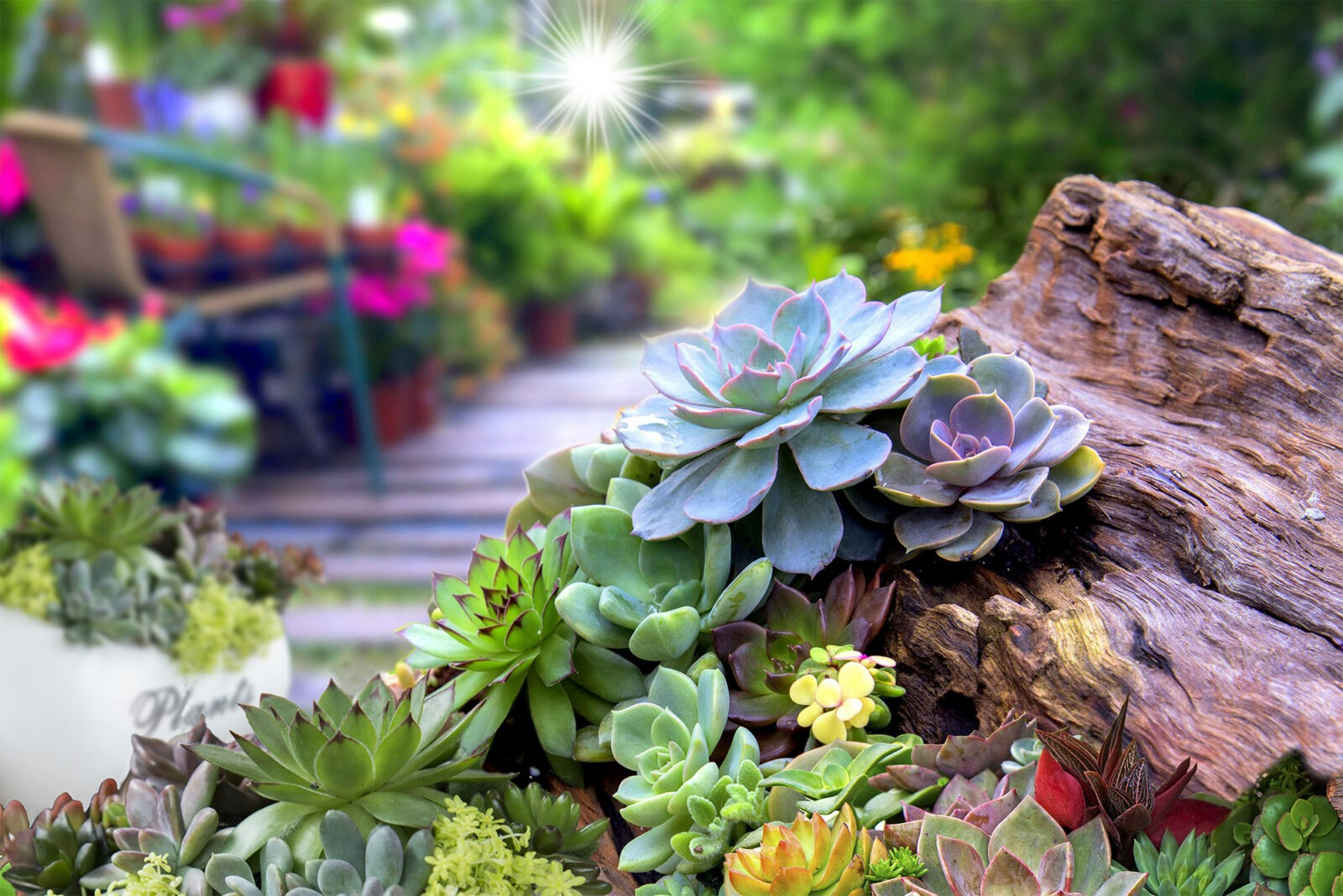 Miniature succulent plants in the garden.
